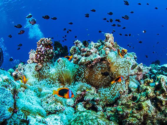 Gorgonne reef 1