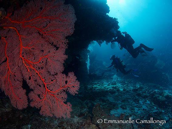 Gorgonne reef 2