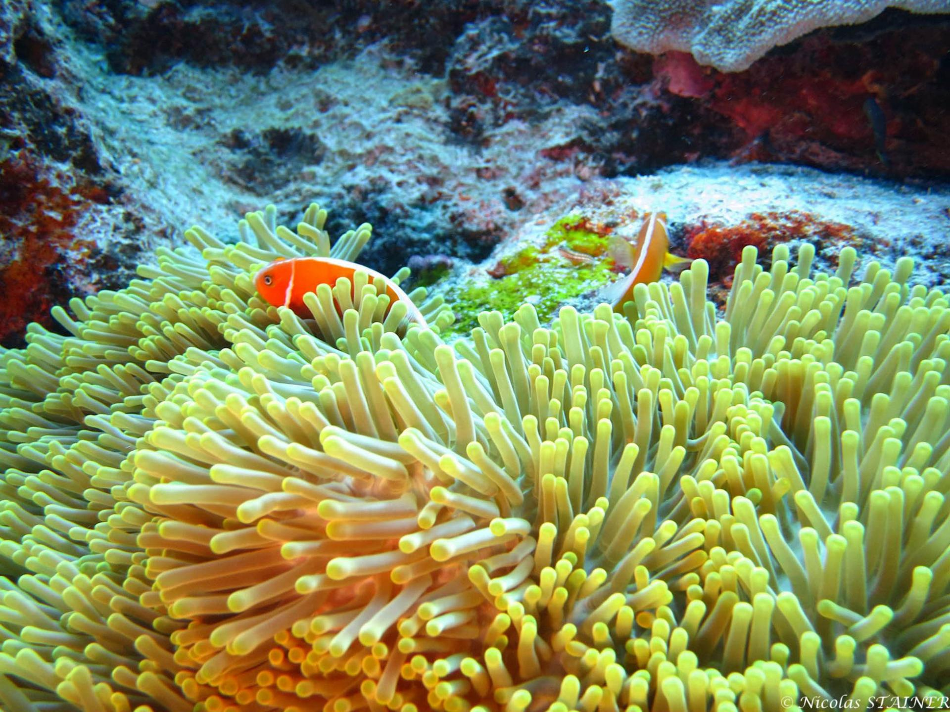 Lagoon safaris photo 11