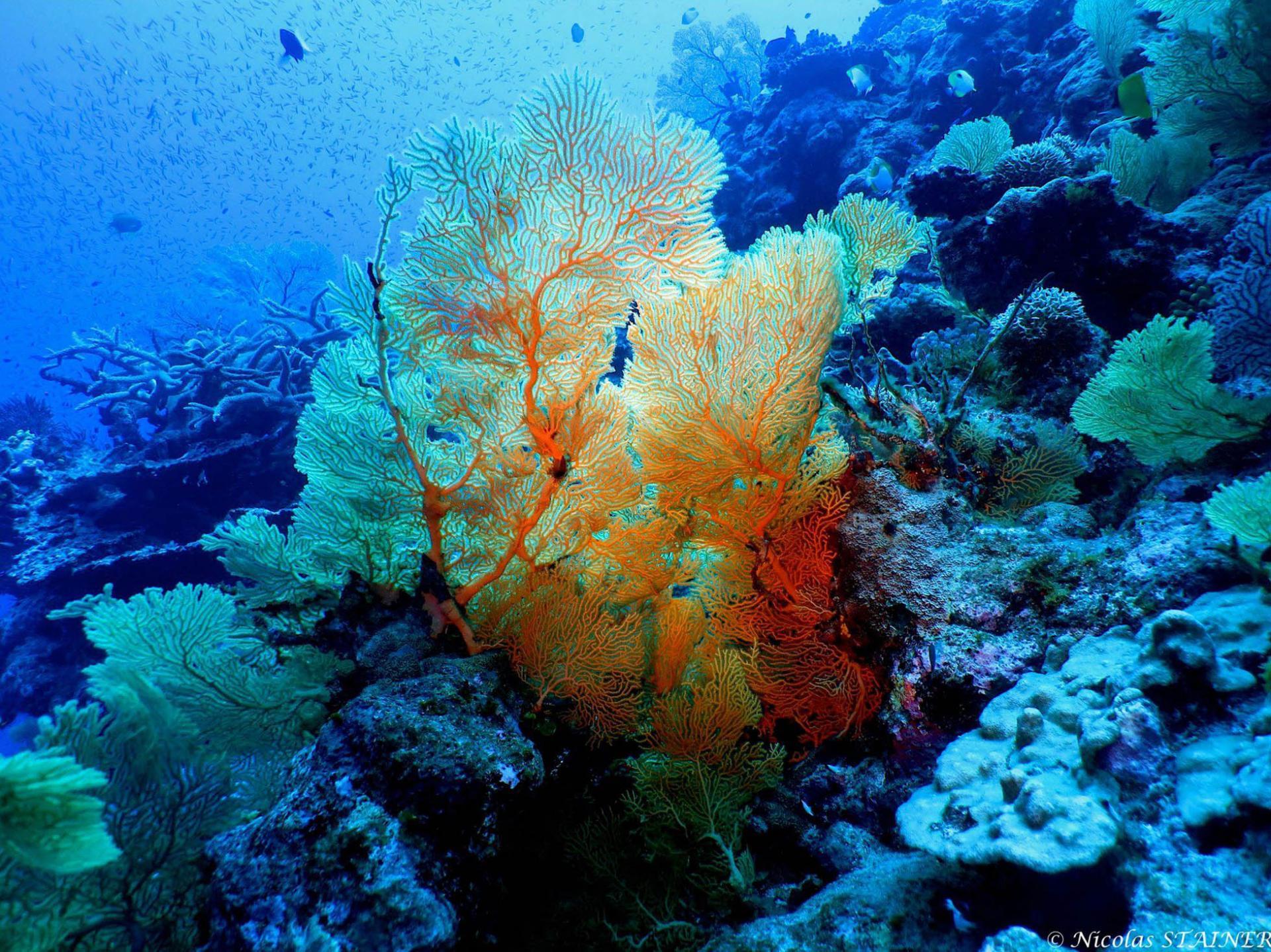 Lagoon safaris photo 16
