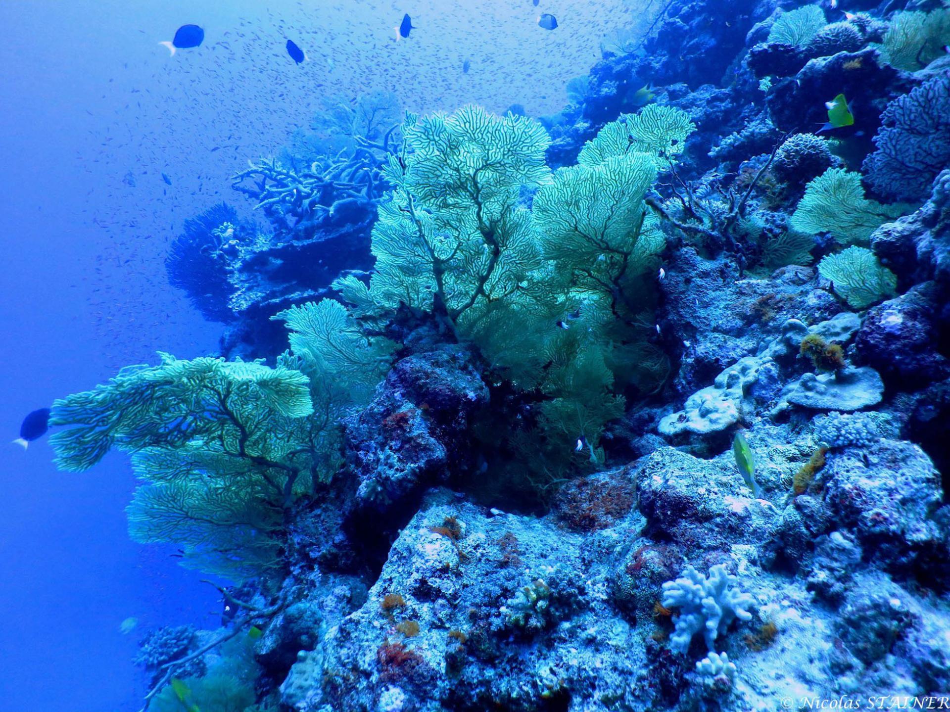 Lagoon safaris photo 18