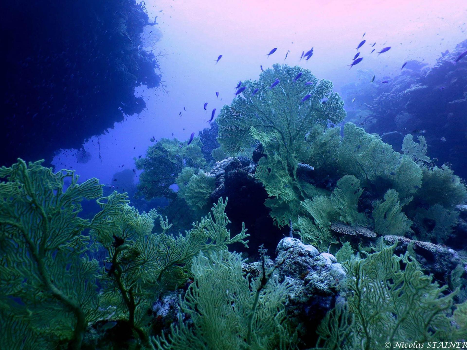 Lagoon safaris photo 4